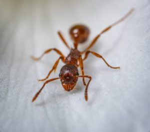 ant control services in London, ON