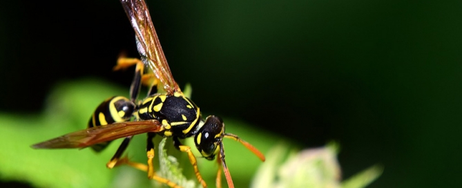 What Does a Wasp Look Like?