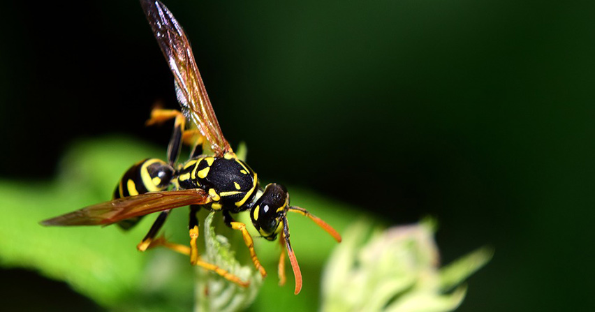 Everything you need to know about wasps