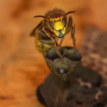 What You Need to Know About Hornets
