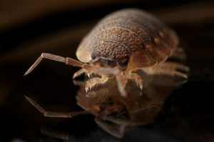 How to prevent bringing bed bugs home with you