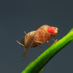 What You Need to Know About Fruit Flies